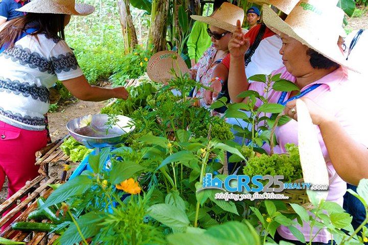Amonsagana fresh-organic-produce