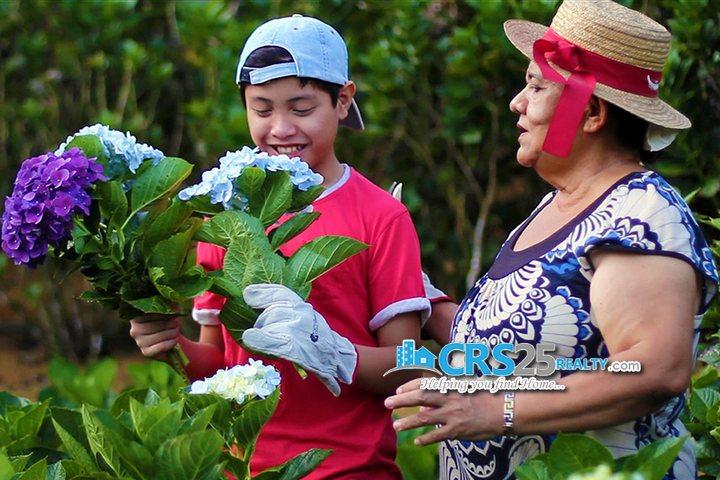 Amonsagana gardening