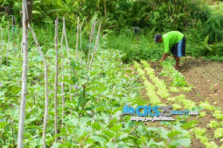 Amonsagana organic-farming